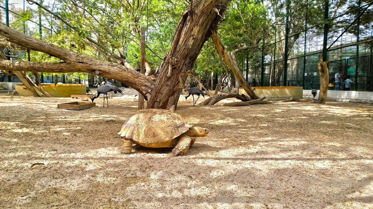 Дубайский зоопарк, черепаха и журавли