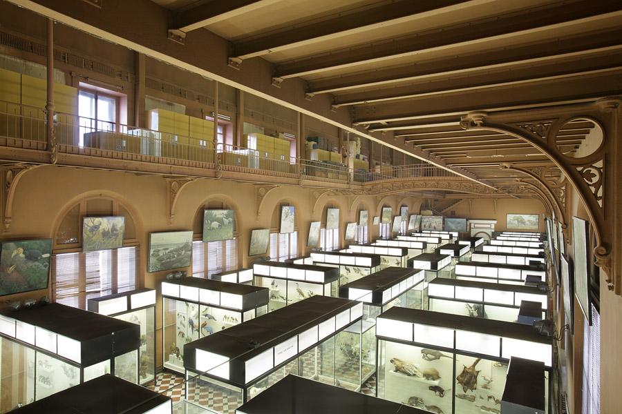 Один из залов музея, Зоологический музей, Москва