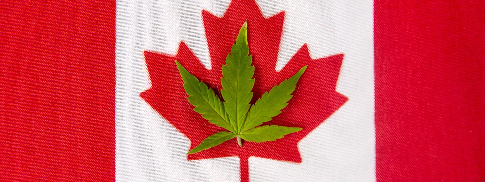 Купить марихуану в будва купить марихуану на авито