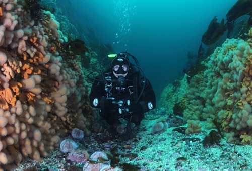 Подводная «фоторыбалка»