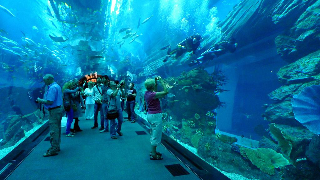 Аквариум в Дубае, туннель