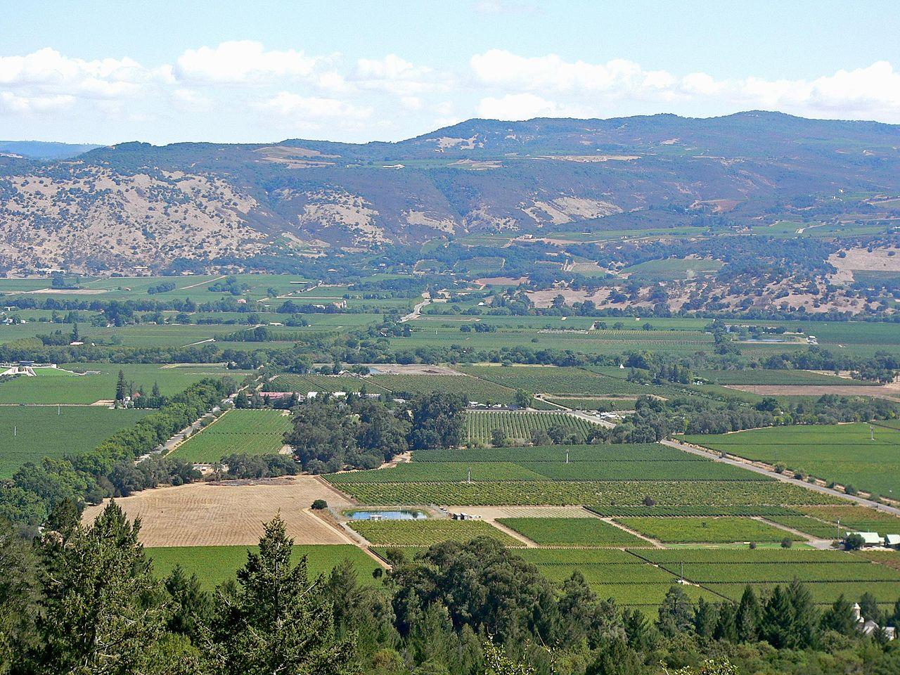 Типичный пейзаж долины Напа, Калифорния