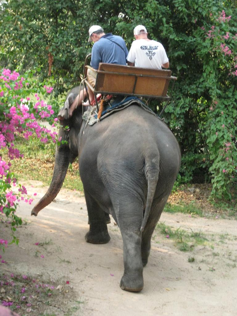 Деревня слонов в Паттайе, прогулка