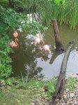 "Еще о природе и красивых ""фламинго"""