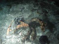Кормление рифовых акул