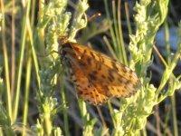 Бабочка в степи
