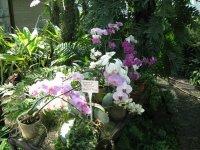 Внутри орхидариума