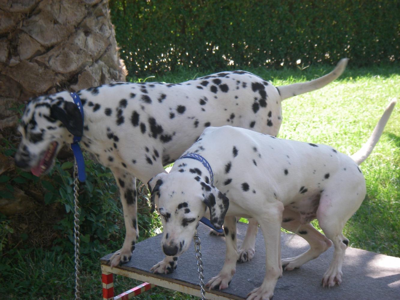 Фотосессия с собаками (За доп. плату)
