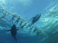 подводная съёмка оператора