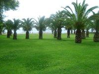 Пальмовая роща на территории отеля
