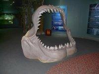 на входе в океанариум