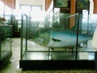 Не маленький тунец.