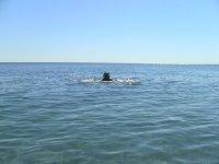 отчаянный пловец