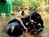 2х минутное купание со слоном