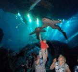 Dubai Aquarium в Дубай Молле