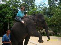 катание на слониках