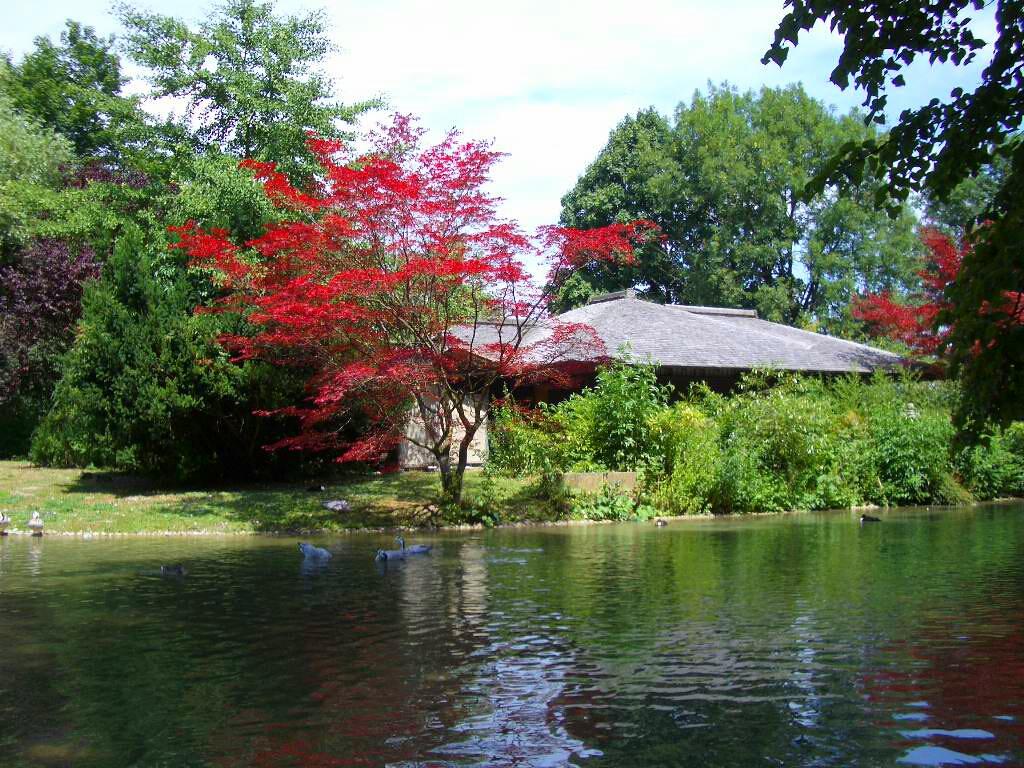 Японский сад и чайный домик
