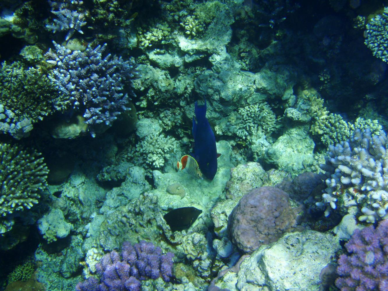 кораллы, рыбки