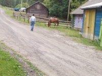 лошадь проявила самостоятельность во время прогулки