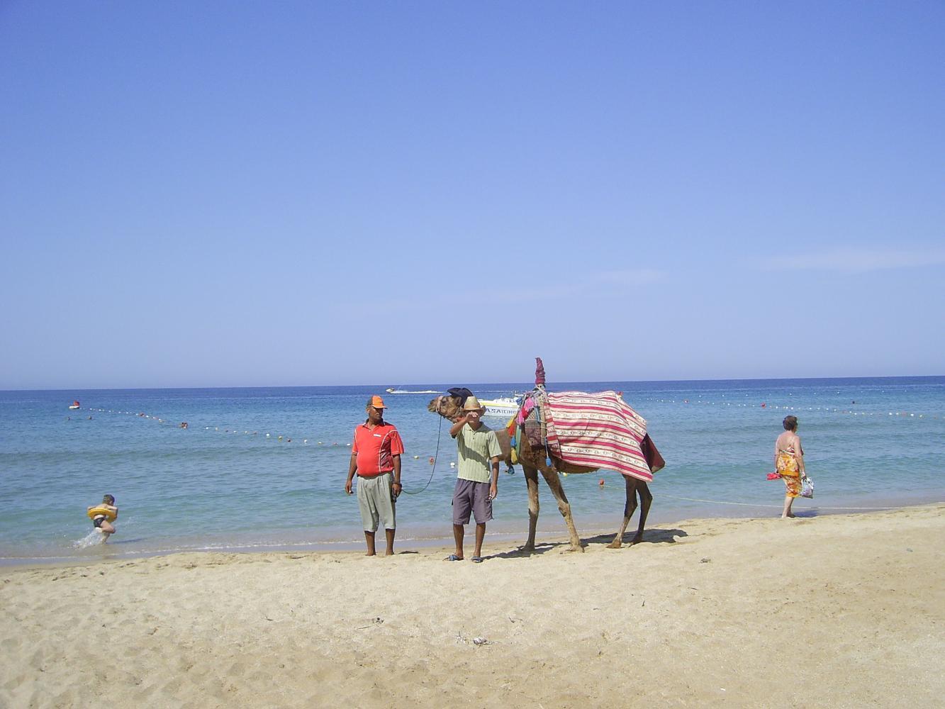 Верблюды на пляже.