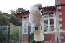 самый дружелюбный попугай