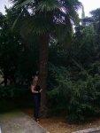 Пальмиовая алея
