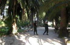Полицеские на пальмовой аллее в Карфагене