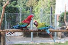 те самые попугаи ))