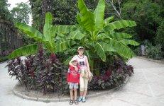 Банановые пальмы в ботаническом саду.