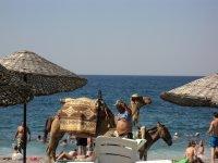 верблюды гуляли по пляжу