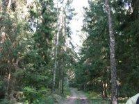 великолепный лес