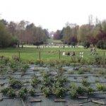 Парк, где куча студентов и пенсионеры с собаками