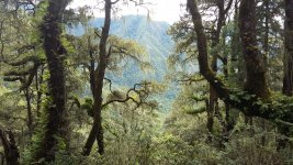Бутанский лес