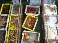 Живые морские обитатели