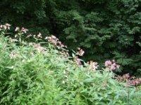 Цветущие травы Коломенского