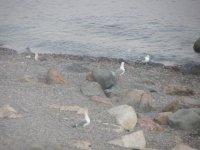 Берег моря в утренней мгле