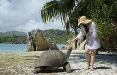 С двухсотлетней черепахой