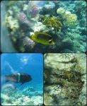 рыбки на рифе