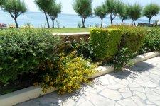 мини- ботанический сад