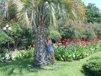 с пальмой