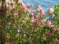 Цветущие растения с манящим ароматом