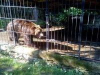 """медведь на базе отдыха """"Байка"""""""