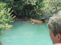 Черепашка на дереве - местный житель реки
