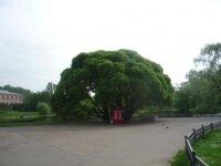 У главного входа в сад имени Н.В. Цицина