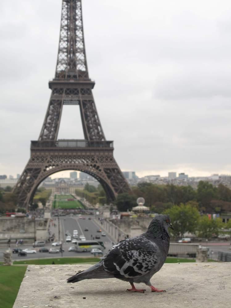 Вид с площади Трокадеро
