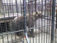 В зоопарке Абзаково
