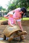 в парке двухсотлетних черепах