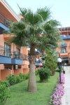 Первый корпус и пальма, местная достопримечательность