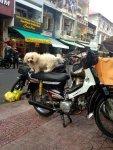 на мопедах ездят даже собаки