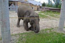Слоненок в ростовском зоопарке